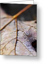 Dewy Leaf Greeting Card by Elena Elisseeva