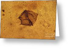 Dinoflagellate Fossil Greeting Card by Eric V. Grave