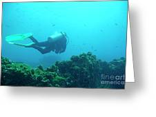 Diver By Rocks On Ocean Floor Greeting Card by Sami Sarkis