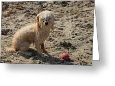 Dog 113 Greeting Card by Joyce StJames