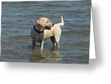 Dog 78 Greeting Card by Joyce StJames