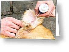Dog Grooming Greeting Card by Photo Researchers, Inc.
