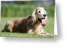 Dog Lying Down On The Green Grass Greeting Card by Mats Silvan