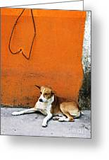 Dog Near Colorful Wall In Mexican Village Greeting Card by Elena Elisseeva