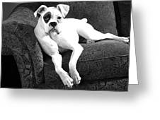 Dog On Couch Greeting Card by Sumit Mehndiratta