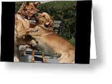 Dog Playground Greeting Card by Valia Bradshaw