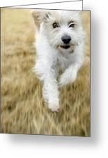 Dog Running Greeting Card by Darwin Wiggett