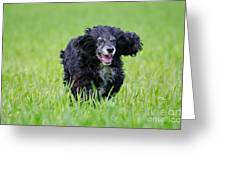 Dog Running On The Green Field Greeting Card by Mats Silvan