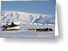 Dog Sled, Qaanaaq, Greenland Greeting Card by Louise Murray