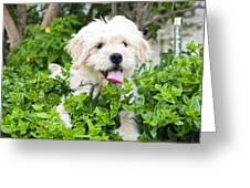 dog Greeting Card by Tom Gowanlock