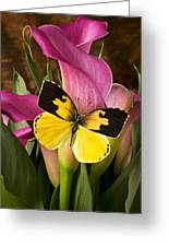 Dogface Butterfly On Pink Calla Lily  Greeting Card by Garry Gay