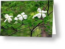 Dogwoods Greeting Card by Deborah  Crew-Johnson