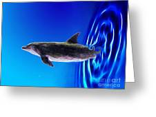 Dolphin Zoom Greeting Card by Methune Hively