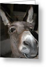 Donkey Sniffs Greeting Card by LeeAnn McLaneGoetz McLaneGoetzStudioLLCcom