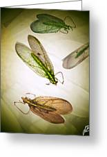 Don't Be Bugged Greeting Card by Jenn Bodro