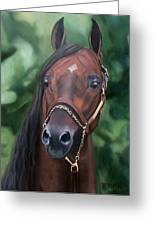 Dont Worry Saddlebred Sire Greeting Card by Donna Thomas