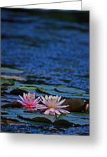 Double Lily Greeting Card by Karol  Livote