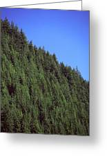 Douglas Fir Forest, British Columbia, Canada Greeting Card by Kaj R. Svensson