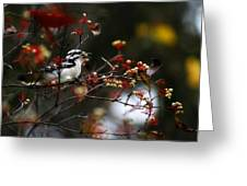 Downy Woodpecker And White Berries Greeting Card by Scott Hovind