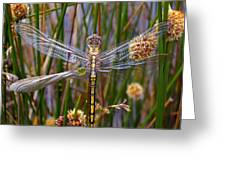 Dragonfly Greeting Card by Alison Lee  Cousland