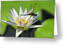 Dragonfly And The Water Lily Greeting Card by Sabrina L Ryan