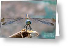 Dragonfly Headshot Greeting Card by Graham Taylor