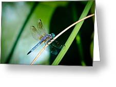 Dragonfly Greeting Card by Jana Smith