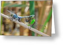 Dragonfly Love Greeting Card by Everet Regal