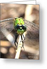 Dragonfly Perspective Greeting Card by Carol Groenen