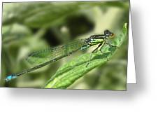 Dragonfly1 Greeting Card by Svetlana Sewell