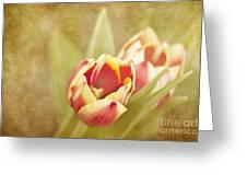 Dreaming Of Spring Greeting Card by Cheryl Davis