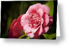 Dreamy Camellia Greeting Card by Teresa Mucha