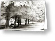 Dreamy Surreal Infrared Park Bench Landscape Greeting Card by Kathy Fornal