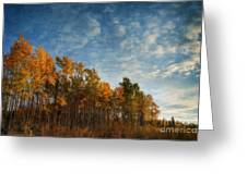 Dressed In Autumn Colors Greeting Card by Priska Wettstein