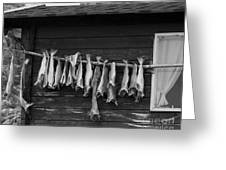 Dried Cod On A Line Greeting Card by Heiko Koehrer-Wagner