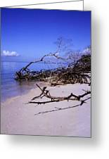 Driftwood Beach Greeting Card by Rosalie Scanlon