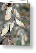 Dry Leaves Greeting Card by Lisa Phillips