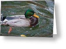 Duck Bathing Series 4 Greeting Card by Craig Hosterman