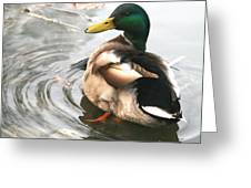 Duck Beauty Greeting Card by Valia Bradshaw