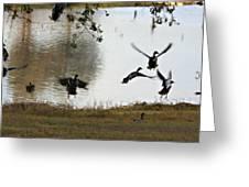 Duck Frenzy Greeting Card by Douglas Barnard