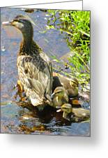 Ducklings Greeting Card by Sarah Gayle Carter