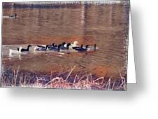Ducks On Canvas Greeting Card by Douglas Barnard