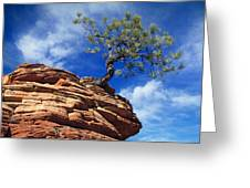 Dwarf Pine And Sandstone Zion Utah Greeting Card by Utah Images