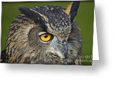 Eagle Owl 2 Greeting Card by Clare Bambers