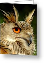 Eagle Owl Greeting Card by Photodream Art
