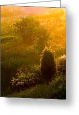 Early Gloaming Greeting Card by Ron Jones