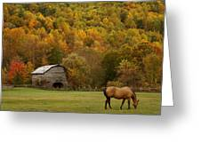 Ease Into Autumn Greeting Card by JK York