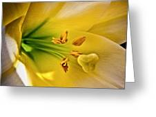 Easter Lily Greeting Card by Joe Carini