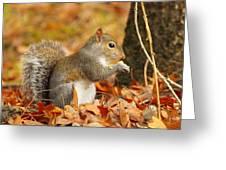 Eastern Grey Squirrel Greeting Card by Andrew McInnes