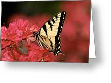Eastern Yellow Tiger Swallowtail And Azaleas Greeting Card by Lara Ellis